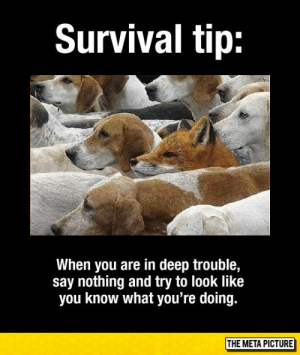 Tumblr, Blog, and Com: Survival tip:  When you are in deep trouble,  say nothing and try to look like  you know what you're doing.  THE META PICTURE awesomesthesia:  Important Survival Tip
