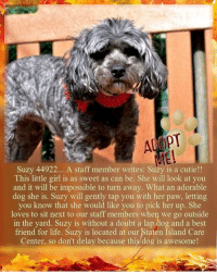 Andrew Bogut, Animals, and Best Friend: Suzy 44922... A staff member writes: Suzy is a cutie!!  This little girl is as sweet as can be. She will look at you  and it will be impossible to turn away. What an adorable  dog she is. Suzy will gently tap you with her paw, letting  you know that she would like you to pick her up. She  loves to sit next to our staff members when we go outside  in the yard. Suzy is without a doubt a lap dog and a best  friend for life. Suzy is located at our Staten Island Care  Center, so don't delay because this dog is awesome **FOSTER or ADOPTER NEEDED**  Suzy 44922... A staff member writes: Suzy is a cutie!! This little girl is as sweet as can be. She will look at you and it will be impossible to turn away. What an adorable dog she is. Suzy will gently tap you with her paw, letting you know that she would like you to pick her up. She loves to sit next to our staff members when we go outside in the yard. Suzy is without a doubt a lap dog and a best friend for life. Suzy is located at our Staten Island Care Center, so don't delay because this dog is awesome!  ✔Pledge✔Tag✔Share✔Foster✔Adopt✔Save a life!  Suzy 44922 Small Mixed Breed Sex female Age 8 yrs (approx.) - 13 lbs My health has been checked.  My vaccinations are up to date. My worming is up to date.  I have been micro-chipped.  I am waiting for you at the Staten Island, NY ACC. Please, Please, Please, save me!  ****************************************** To FOSTER or ADOPT,  SPEAK UP NOW & Save a Life:  Direct Adopt from the ACC Or Apply with rescues Or Message Must Love Dogs - Saving NYC Dogs for assistance ASAP!!! ****************************************** The general rule is to foster you have to be within 4 hours of the NYC ACC approved New Hope partner rescues you are applying with and to adopt you will have to be in the general NE US area; NY, NJ, CT, PA, DC, MD, DE, NH, RI, MA, VT & ME (some rescues will transport to VA).  ================================= ... NOTE: *** WE HAVE