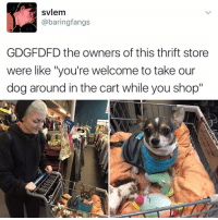 """Memes, Borrow, and 🤖: svlem  @baring fangs  GDGFDFD the owners of this thrift store  were like """"you're welcome to take our  dog around in the cart while you shop""""  MEN's I would shop at any store every day if they let me borrow a puppy while I shop"""