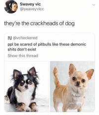 Lol: Swavey vic  @swaveyvicc  they're the crackheads of dog  I\I @vcheckered  ppl be scared of pitbulls like these demonic  shits don't exist  Show this thread  ·匪 Lol