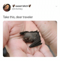 Bitch, Wow, and Relatable: sweet bitch  @tr4shley  Take this, dear traveler wow so nice thanks (: