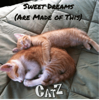 Good night, Facebook.: SWEET DREAMS  (ARE MADE OF That  CATA Good night, Facebook.