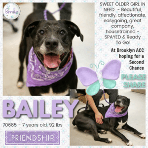 To Be KILLED 9/5/19 in NYC  *STAFF FAV ALERT ~ Lab Mix Bailey Has the Most Stylish Salt and Pepper Snout!  SWEET SWEET MIDDLE AGED GIRL HOPING SOMEONE NOTICES HOW badly she wants to live and be loved. A staff member writes: Bailey is an extremely good girl! She loves cookies and will gladly sit and give you paw for one. She leaned into me as I gave her pets. She's a bit nervous but I was easily able to be her buddy with a bit of basic respect and of course treats. When she saw one of her human shelter friends again, her little nubby tail wagged excitedly. She loved the gentle attention and pets I gave her. She also kept me company while I worked, and we enjoyed a nice stroll as well. When we spent some time sniffing in the play yard, she didn't bark or react when another dog was nearby. She also appears to be housebroken. She is a real soulful sweetie!  A staff member writes:  Bailey is an extremely good girl! She loves cookies and will gladly sit and give you paw for one. She leaned into me as I gave her pets. She's a bit nervous but I was easily able to be her buddy with a bit of basic respect and of course treats. When she saw one of her human shelter friends again, her little nubby tail wagged excitedly. She loved the gentle attention and pets I gave her. She also kept me company while I worked, and we enjoyed a nice stroll as well. When we spent some time sniffing in the play yard, she didn't bark or react when another dog was nearby. She is a real soulful sweetie!  MY MOVIE:  Bailey 💜 as obedient as she is cute  https://youtu.be/AQQmhXh21OA  BAILEY@BROOKLYN ACC Hello, my name is Bailey My animal id is #70685 I am a desexed female black dog at the  Brooklyn Animal Care Center The shelter thinks I am about 7 years old, 92 lbs Came into shelter as owner surrender 8/19/2019 Reason stated - not good with kids Bailey is rescue only   Bailey was placed at risk due to behavior concerns; Due to Bailey's previous bite history combined with her overall level of fear, we 
