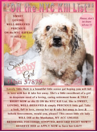 Andrew Bogut, Animals, and Beautiful: SWEET  Please, don't  let them  kill me !!!  OVING  WELL-BEHAVED  PRECIOUS  ON the NYC Kill List  HELP !!!  oce  eit  iti 37879  Lovely little Haiti is a beautiful little senior gal hoping you will fall  in love with her & take her away. She's a tle sweetheart of a girl  in desperate need of a loving, caring retirement home & THAT  RIGHT NOW asshe IS ON the NYC Kill List-She is SWEET,  LOVING, WELL-BEHAVED & simply PRECIOUS ltle gal. Take  a look, fall in love, swoop her up & take her away to loxe &  behold forevermore, would you, please? This sweet little ole lady  WILL DIE at the Manhattan, NY ACC UNLESS  RESERVED, FOSTERED, ADOPTED, RESCUED RIGHT NOW!!!  RESERVE HER or APPLY NOW to Save her Life!!!  8 ***** To Be KILLED 8/13/18 in NYC *****  Lovely little Haiti is a beautiful little senior gal hoping you will fall in love with her & take her away. She's a little sweetheart of a girl in desperate need of a loving, caring retirement home & THAT RIGHT NOW as she IS ON the NYC Kill List. She is SWEET, LOVING, WELL-BEHAVED, SOCIAL & simply PRECIOUS little gal. Take a look, fall in love, swoop her up & take her away to love & behold forevermore, would you, please? RESERVE HER or APPLY NOW to Save her Life!!! This sweet little ole lady WILL DIE at the Manhattan, NY ACC UNLESS ✔RESERVED✔FOSTERED✔ADOPTED✔RESCUED✔RIGHT NOW!!!   ******************************************** ** ON the PUBLIC LIST **  RESERVE her RIGHT NOW & Save her Life via the ACC LINK >  https://newhope.shelterbuddy.com/Animal/Profile/Index/90f47a63-f7d8-48c9-8bea-2035863a1034  or Message Must Love Dogs - Saving NYC Dogs immediately. SAVE her LIFE RIGHT NOW!!! ********************************************  A VOLUNTEER WRITES: We met her yesterday night. She had just arrived from the Bronx as a euth request and looked so good, outgoing, active and friendly. Lots of matting...She seems to have some health issues , age not helping of course but does not appear worse off th