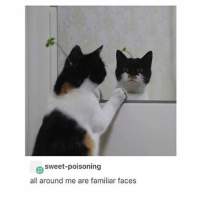{ funnytumblr textposts funnytextpost tumblr funnytumblrpost tumblrfunny followme tumblrfunny textpost tumblrpost haha}: sweet-poisoning  all around me are familiar faces { funnytumblr textposts funnytextpost tumblr funnytumblrpost tumblrfunny followme tumblrfunny textpost tumblrpost haha}