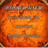 Sweet Potato Can  kick Start  healthy digestion  SoopaPets.com Paw-fect for kick starting the new year diets!! Soopa yummy too!  <3