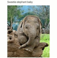 Funny, Ted, and Elephant: Sweetie elephant baby It's so adorable (@hilarious.ted)