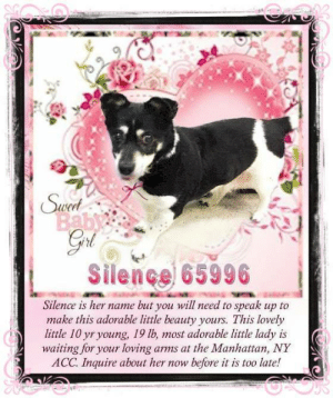 Animals, Desperate, and Dogs: Swek  Babwie  Grl  Silence 65996  Silence is her name but you will need to speak up to  make this adorable little beauty yours. This lovely  little 10 yr young, 19 Ib, most adorable little lady is  waiting for your loving arms at the Manhattan, NY  ACC. Inquire about her now before it is too late! **FOSTER or ADOPTER NEEDED ASAP** Silence is her name but you will need to speak up to make this adorable little beauty yours. This lovely little 10 yr young, 19 lb, most adorable little lady is waiting for your loving arms at the Manhattan, NY ACC. Inquire about her now before it is too late!  ✔Pledge✔Tag✔Share✔FOSTER✔ADOPT✔Save a life!  Silence 65996  Small Mixed Breed Sex female Age 10 yrs (approx.) - 19 lbs  My health has been checked.  My vaccinations are up to date. My worming is up to date.  I have been micro-chipped.   I am waiting for you at the Manhattan, NY ACC. Please, Please, Please, save me!  Found Location  Balcom Avenue BRONX, 10465 Date Found 6/14/2019  **************************************** *** TO FOSTER OR ADOPT ***   If you would like to adopt a NYC ACC dog, and can get to the shelter in person to complete the adoption process, you can contact the shelter directly. We have provided the Brooklyn, Staten Island and Manhattan information below. Adoption hours at these facilities is Noon – 8:00 p.m. (6:30 on weekends)  If you CANNOT get to the shelter in person and you want to FOSTER OR ADOPT a NYC ACC Dog, you can PRIVATE MESSAGE our Must Love Dogs - Saving NYC Dogs page for assistance. PLEASE NOTE: You MUST live in NY, NJ, PA, CT, RI, DE, MD, MA, NH, VT, ME or Northern VA. You will need to fill out applications with a New Hope Rescue Partner to foster or adopt a NYC ACC dog. Transport is available if you live within the prescribed range of states.  Shelter contact information: Phone number (212) 788-4000 Email adopt@nycacc.org  Shelter Addresses: Brooklyn Shelter: 2336 Linden Boulevard Brooklyn, NY 11208 Manhattan Shelter: 326 East 110 St. New York, NY 10029 Staten Island Shelter: 3139 Veterans Road West Staten Island, NY 10309 **************************************  NOTE:  WE HAVE NO OTHER INFORMATION THAN WHAT IS LISTED WITH THIS FLYER ***  ************************************** RE: ACC site Just because a dog is not on the ACC site does NOT necessarily mean safe. There are many reasons for this like a hold or an eval has not been conducted yet or the dog is rescue-only... the list goes on... Please, do share & apply to foster/adopt these pups as well until their thread is updated with their most current status. TY! ****************************************** About Must Love Dogs - Saving NYC Dogs: We are a group of advocates (NOT a shelter NOR a rescue group) dedicated to finding loving homes for NYC dogs in desperate need. ALL the dogs on our site need Rescue, Fosters, or Adopters & that ASAP as they are in NYC high-kill shelters. If you cannot foster or adopt, please share them far & wide. Thank you for caring!! <3 ****************************************** RESCUES: * Indicates New Hope Rescue partner is accepting applications for fosters and/or adopters. http://www.nycacc.org/get-involved/new-hope/nhpartners ****************************************** https://www.nycacc.org/adopt/silence-65996 ++++ http://nycaccpets.shelterbuddy.com/animal/animalDetails.asp?s=adoption&searchTypeId=4&animalType=3%2C16&datelostfoundmonth=6&datelostfoundday=15&datelostfoundyear=2019&tpage=8&find-submitbtn=Find+Animals&pagesize=16&task=view&searchType=4&animalid=99601 ++++ https://nycaccpets.shelterbuddy.com/animal/animalDetails.asp?task=search&advanced=1&rspca_id=65996&animalType=1%2C2%2C15%2C3%2C16%2C15%2C16%2C86%2C79&datelostfoundmonth=6&datelostfoundday=1&datelostfoundyear=2019&find-submitbtn=Find+Animals&tpage=1&searchType=2&animalid=99601 ++++ Beamer Maximillian Carolin Hocker Caro Hocker