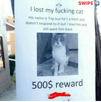 Bitch, Fucking, and Love: SWIPE  I lost my fucking cat  His name is Trip but he's a bitch and  doesn't respond to it but I love him and  still want him back  500$ reward Happy days 🐈