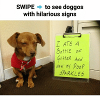 Memes, Poop, and Hilarious: SWIPE  to see doggos  with hilarious signs  I ATE A  Bott/E OF  littER ANd  Now My poop  SPARKLE The last one 😂 @doggocatcat