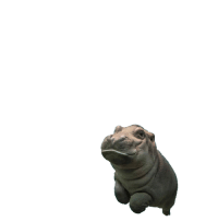 swipe up to see a baby hippo fly https://t.co/F199vgtsXx: swipe up to see a baby hippo fly https://t.co/F199vgtsXx