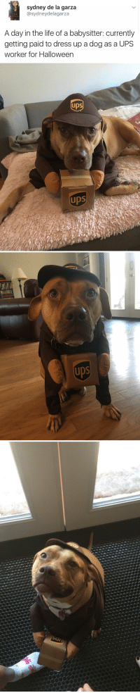 Bad, Bad Day, and Halloween: sydney de la garza  asydneydelagarza  A day in the life of a babysitter: currently  getting paid to dress up a dog as a UPS  worker for Halloween   ups)  Ups  ups   UDS   IDS If you're having a bad day, you're welcome 😍