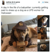 Funny, Halloween, and Life: sydney de la garza  @sydneydelagarza  Follow  A day in the life of a babysitter: currently getting  paid to dress up a dog as a UPS worker for  Halloween  ups  UDS  4  UDS The package was for me FYI