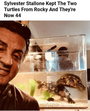 Rocky, Sylvester Stallone, and Wholesome: Sylvester Stallone Kept The Two  Turtles From Rocky And They're  Now 44 Never realized Sylvester Stallone was so wholesome
