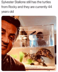 Rocky, Sylvester Stallone, and Old: Sylvester Stallone still has the turtles  from Rocky and they are currently 44  years old