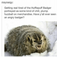 badgers: synergy  Getting real tired of the Hufflepuff Badger  portrayed as some kind of chill, plump  fuzzball on merchandise. Have y'all ever seen  an angry badger?