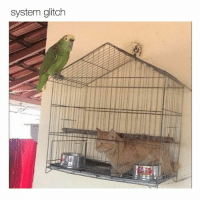 Memes, 🤖, and Cat: system glitch it's opposites day cat! (@aranjevi )