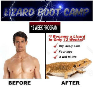 """Dank, Memes, and Reddit: SZARD B00T CAM  12 WEEK PROGRAM  """"I Became a Lizard  in Only 12 Weeks!""""  Dry, scaly skin  Four legs  A will to live  BEFORE  AFTER lizard boot camp d:^) q:^) by CIean FOLLOW 4 MORE MEMES."""