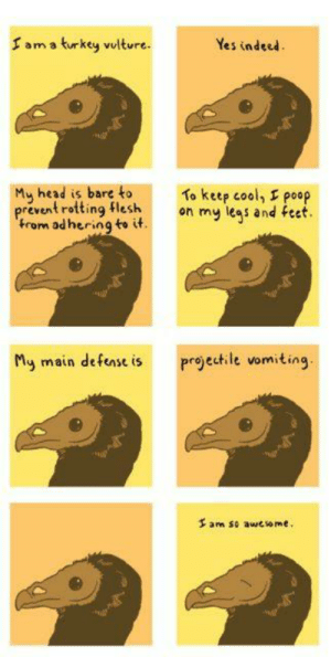 Facts, Head, and Omg: T am a turkey vulture.  Yes indeed  My head is bare toTo keep cool  prevent rotting flesh  trom ad hering to if  poop  My main defens is projectile vomiting  3 am so awcsome omg-images:  Animal Facts Presents: The Turkey Vulture
