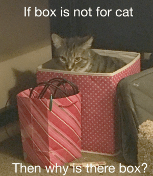 Bane, Beautiful, and Cute: t box is not for cat  Then why is there box? thecutestcatever:  merlyn-bane: thecutestcatever:  richiemonster15:   coolcatgroup:  tangerinebonfire:  coolcatgroup:   BOX FOR PLAY    Look at this beautiful angel          @richiemonster15 Absolute purrfection    @merlyn-bane CUTE 🙀💖