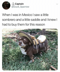 Memes, Saw, and Duck: t Captain  @Duck_Sparrow  When l was in Mexico l saw a little  sombrero and a little saddle and I knew l  had to buy them for this reason
