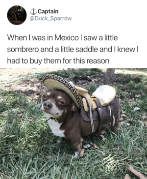 Saw, Target, and Tumblr: t Captain  @Duck_Sparrow  When l was in Mexico l saw a little  sombrero and a little saddle and I knew l  had to buy them for this reason tastefullyoffensive:Ay caramba. (via Duck_Sparrow)
