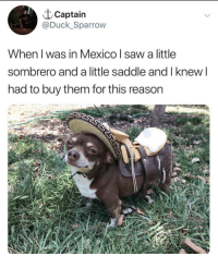 Saw, Duck, and Mexico: t Captain  @Duck_Sparrow  When l was in Mexico saw a little  sombrero and a little saddle and l knew l  had to buy them for this reason me trying to fit in at the village fair