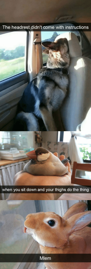 Target, Tumblr, and Animal: T he headrest didn't come with instructions   when you sit down and your thighs do the thing   Mlem animalsnaps:Animal snaps