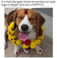 (@x__social_butterfly__x) is one of my favorite furry critter meme accounts on the Gram!: t is that day again where we worship our loyal  dogs in Nepal!! And she is HAPPY!!!!  Pic: reddit u/thedoors316  @DrSmashlove (@x__social_butterfly__x) is one of my favorite furry critter meme accounts on the Gram!