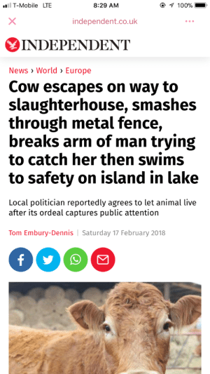Anaconda, News, and T-Mobile: T-Mobile LTE  8:29 AM  100%  independent.co.uk  INDEPENDENT  News World> Europe  Cow escapes on way to  slaughterhouse, smashes  through metal fence,  breaks arm of man trying  to catch her then swims  to safety on island in lake  Local politician reportedly agrees to let animal live  after its ordeal captures public attention  Tom Embury-Dennis Saturday 17 February 2018