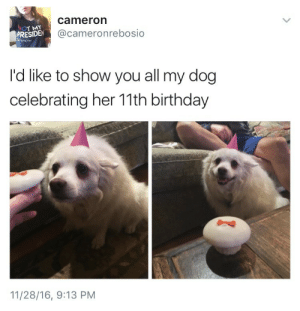 Birthday, Target, and Tumblr: T MY  PRESIDEN  cameron  @cameronrebosio  No  I'd like to show you all my dog  celebrating her 11th birthday  11/28/16, 9:13 PM sherolck:i have no followers on twitter and i wanted to show this off