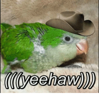 wot in tarnation: TA0yeahaw))) wot in tarnation
