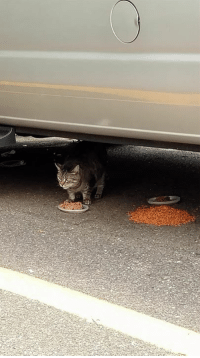 Memes, 🤖, and Cat: Tabby heard my car when I went to fill my tank up.  Smart cat.