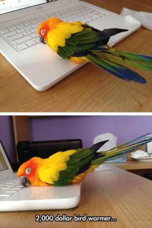 srsfunny:The Most Expensive Bird Warmer: tacdo  2,000 dollar bird warmer... srsfunny:The Most Expensive Bird Warmer