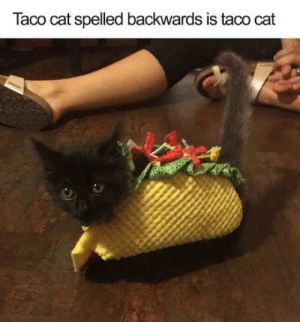 Club, Life, and Tumblr: Taco cat spelled backwards is taco cat laughoutloud-club:  Taco cat for life
