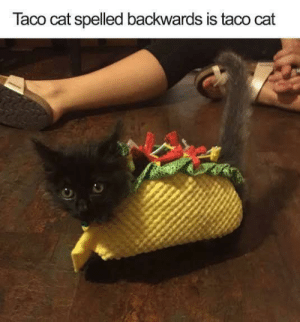 Adorable, Cat, and Taco: Taco cat spelled backwards is taco cat So adorable :)