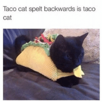 HAVE A GOOD NIGHT WITH YOUR EXPLODED FUCKING BRAIN (IG: @whisper_app): Taco cat spelt backwards is taco  cat HAVE A GOOD NIGHT WITH YOUR EXPLODED FUCKING BRAIN (IG: @whisper_app)