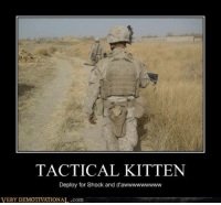 The perfect weapon.: TACTICAL KITTEN  Deploy for Shock and d'awwwwwwwww  VERY DEMOTIVATIONAL .com The perfect weapon.