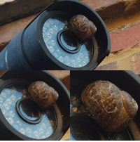 Snail, Action, and Tactical: Tactical Snail Action