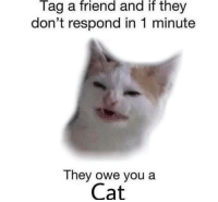 Cat, Friend, and They: Tag a friend and if they  don't respond in 1 minute  They owe you a  Cat
