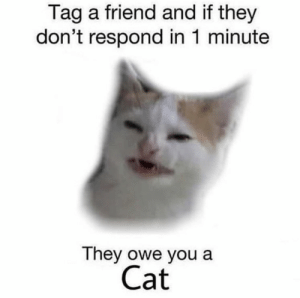 Memes, 🤖, and Cat: Tag a friend and if they  don't respond in 1 minute  They owe you a  Cat https://t.co/Ovx6uu2JfU