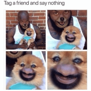 Animals, Memes, and World: Tag a friend and say nothing Dog Memes Of The Day 32 Pics – Ep51 #animalmemes #dogmemes #memes - Lovely Animals World