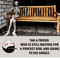 Be Like, Meme, and Memes: TAG A FRIEND  WHO IS STILL WAITING FOR  A PERFECT GIRL AND GOING  TO DIE SINGLE. Twitter: BLB247 Snapchat : BELIKEBRO.COM belikebro sarcasm meme Follow @be.like.bro