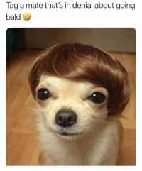 Girl Memes, Use, and In Denial: Tag a mate that's in denial about going  bald If ur balding use @hims