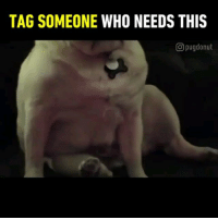 Memes, Sexy, and Good: TAG SOMEONE WHO NEEDS THIS  O pugdonut Tag someone who needs a good boi 😉 Thanks @pugdonut for this sexy 9GAGFunoff vid. - - - pug romantic goodboy
