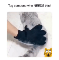 Crazy, Memes, and Link: Tag someone who NEEDS this! Pet lovers are going Crazy over these Deshedding Gloves from @indigopetco 😍No more annoying loose hairs. Grooming has never been so easy!!🙀 60% off Today only!! Tap the link in @indigopetco's bio to get yours 💞 - SHOP: @indigopetco www.indigopetco.com
