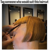 Haircut, Memes, and Tag Someone: Tag someone who would suit this haircut We all know someone who would suit this 😂✂️ (@hairdemarco)