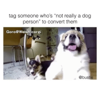 "Corgi, Memes, and Video: tag someone who's ""not really a dog  person"" to convert them  Goro@Welsh corgi  @bustle *Puts video on repeat for self* Via @bustle Pup goro@welshcorgi"