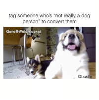 "Corgi, Memes, and Omg: tag someone who's ""not really a dog  person"" to convert them  Goro@Welsh corgi  @bustle omg"