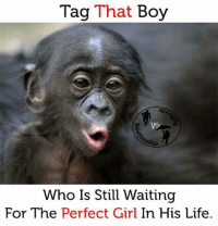 Life, Memes, and Perfect Girl: Tag That Boy  Who Is Still Waiting  For The Perfect Girl In His Life.